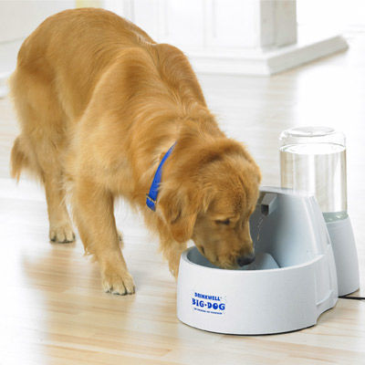 Can I Give My Dog Filtered Water