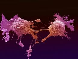 mutated cell